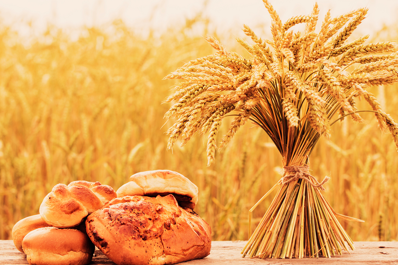 A trigo-dependência e sua estranha história